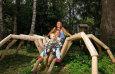Märchenwald / Zum Vergrößern auf das Bild klicken